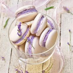 african violet macaron