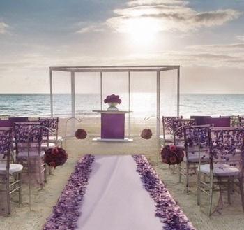 african violet reception
