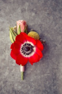 Poppy Red Bout