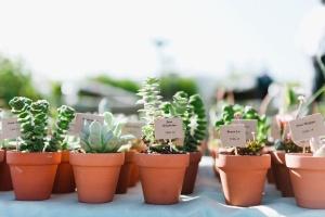 terracota succulent favor