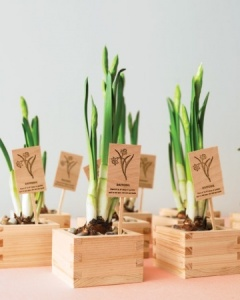 wooden box plant favor