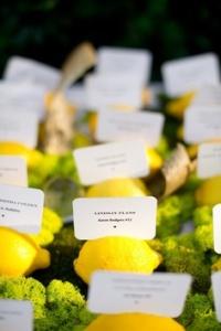 lemon zest 14