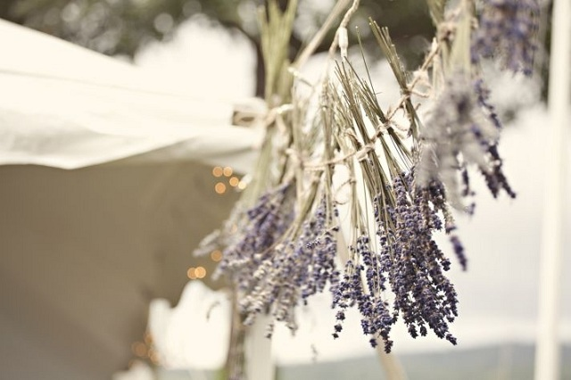 Lavender Theme 5