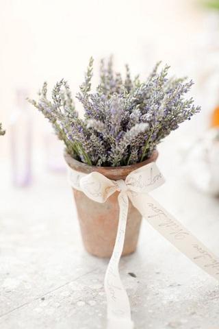 Lavender Theme 8