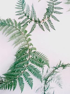 fern wedding 14