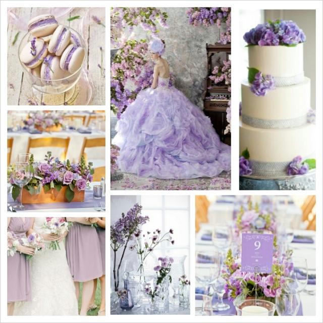 Violet Tulip_1